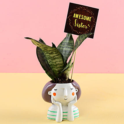 Online Rakhi With  Plant For Brother:Resin Planters