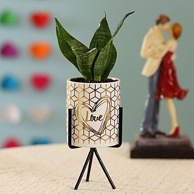 Sansevieria Plant in Ceramic Pot:Ceramic Planters