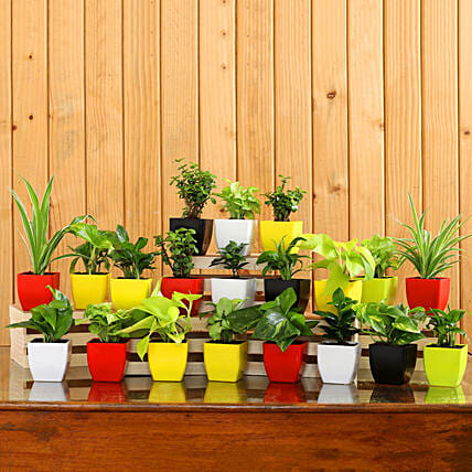 Set Of 20 Beautiful Plants In Plastic Pots:New Arrival Gifts