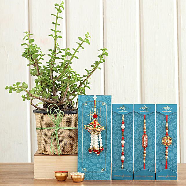 Set Of 4 Rakhis Jade Plant:Set of 4 Rakhi