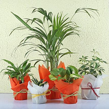 Set Of Exotic Plants Online