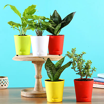 Plants In Multicoloured Pots Online