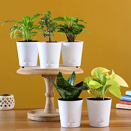 Online  Plants In White Pots