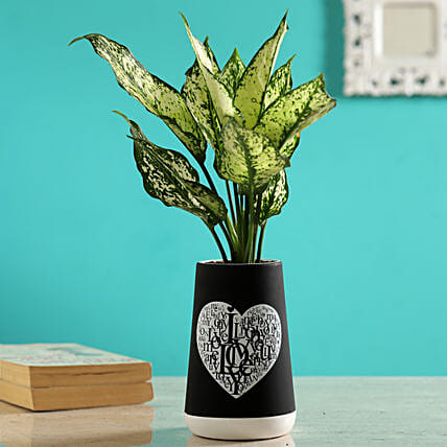 Silver Aglaonema Plant In Ceramic Love Pot