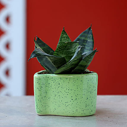Online Snakeskin In Green Heart Shaped Pot