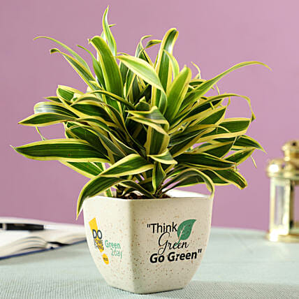 song of indian plant in printed ceramic pot online