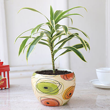 Online Plant In Beige Pot
