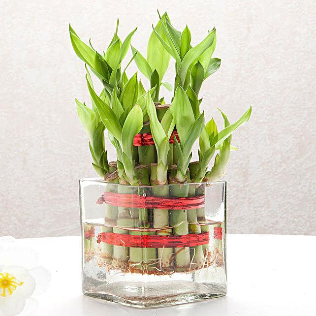 Square Vase 2 Layer Bamboo Plant :Plants Under-499