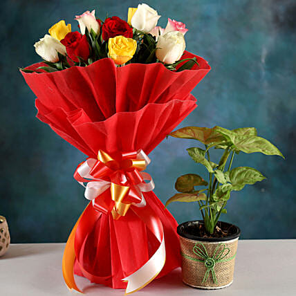 Send Syngonium Plant And Rose Bouquet:Buy Air Purifying Plants