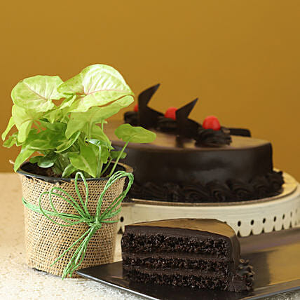 Online Syngonium Plant With Cake