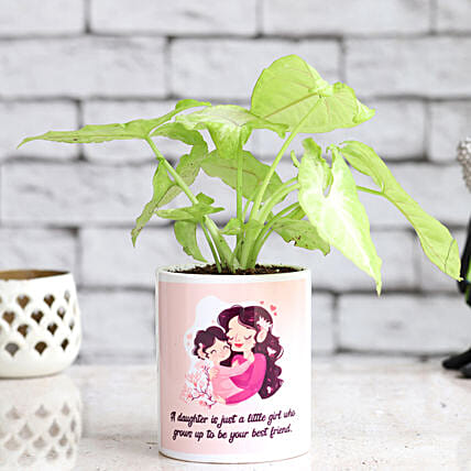 Online Syngonium Plant For Daughter