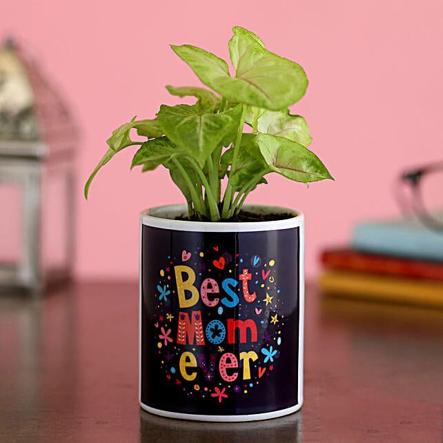 Syngonium Plant In Best Mom Ever Ceramic Planter