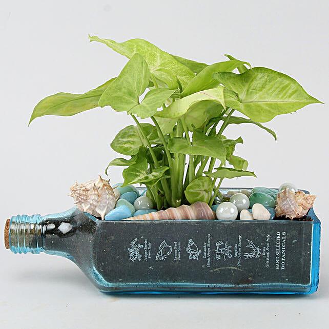 Syngonium Plant In Bombay Sapphire Bottle Planter