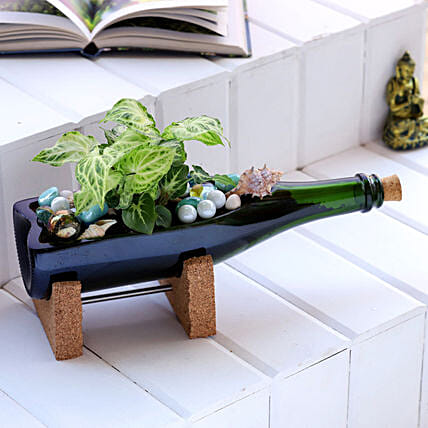 Syngonium Plant In Elegant Champagne Bottle Planter