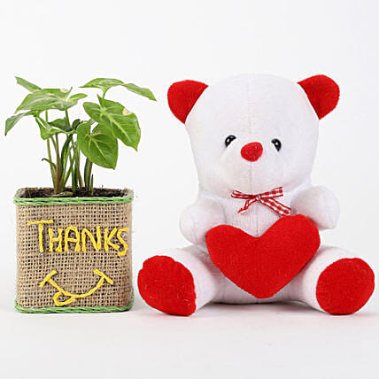 Teddy and Printed Plant Pot