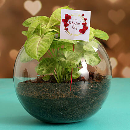 Syngonium Plant In Glass Vase With V-Day Tag Hand Delivery