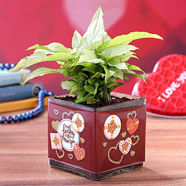 Syngonium Plant in Valentines Theme Glass Vase