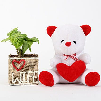 Teddy and Plant Combo for Wife:Plants N Teddy Bears