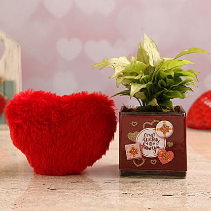 Syngonium Plant In Lucky to Have You Vase & Red Heart:Send Soft toys to Noida