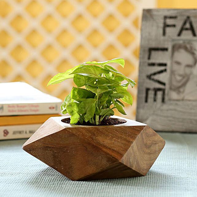 Indoor Plant In Wooden Planter