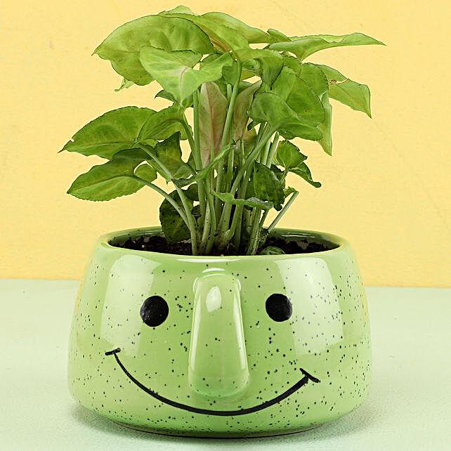 Online Plant in Smiley Pot
