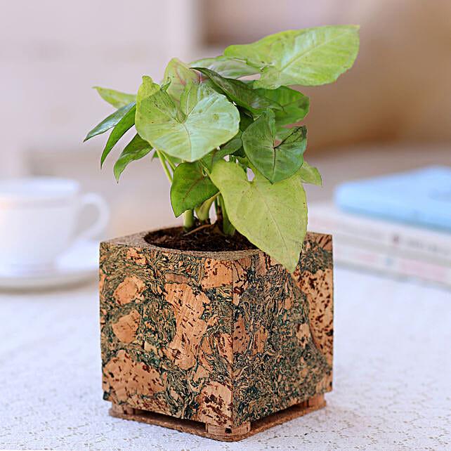 Syngonium Plant In Designer Cork Planter