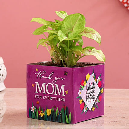 Syngonium Plant In Thank You Mom Glass Vase