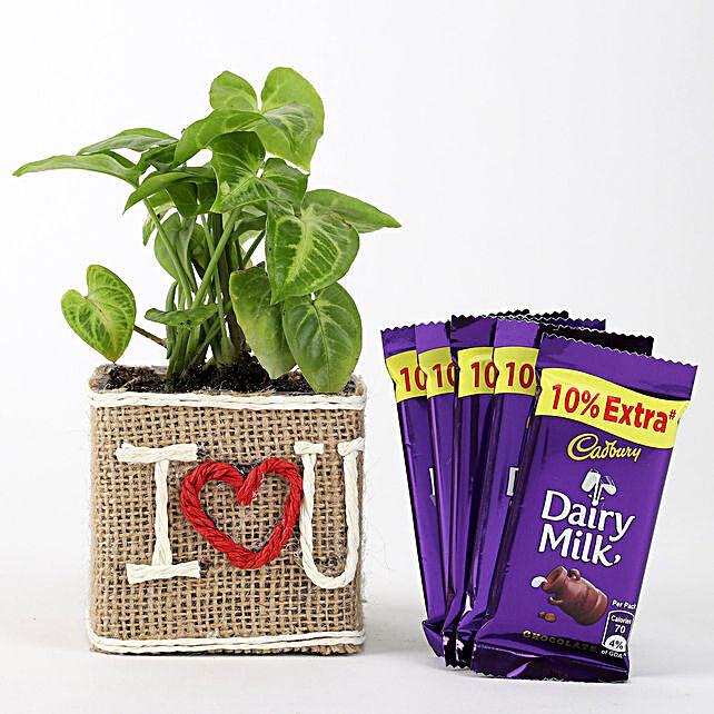 Valentine Love Plant with Chocolate