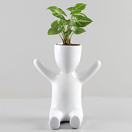 Plants with Planter Online:Fiber Planters