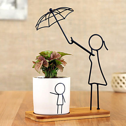 Syngonium Plant In White Pot With Cute Umbrella Stand:Planter Stands