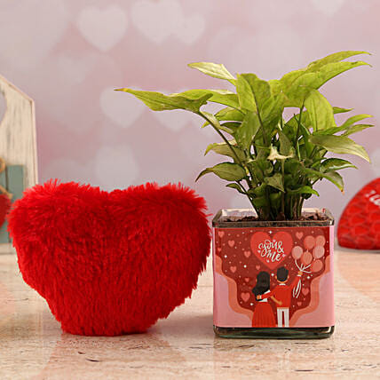 Syngonium Plant In You N Me Vase & Red Heart:Romantic Soft toys