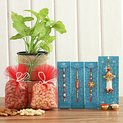 online Syngonium Plant & Nuts With Set Of 4 Rakhis