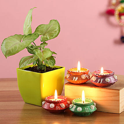 diwali celebration with plant n diya online:Send Diwali Gifts To Hyderabad