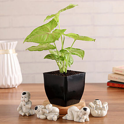 Syngonium Plant With Cute Baby Buddha Figurines