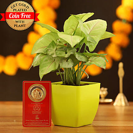 Syngonium Plant With Free Gold Plated Coin:Diwali Deals