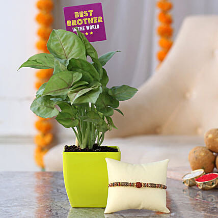 Plant With Rakhi Combos