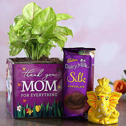 Thank U Mom Syngonium Plant And Dairy Milk Silk Hamper:Buy Plants Combos