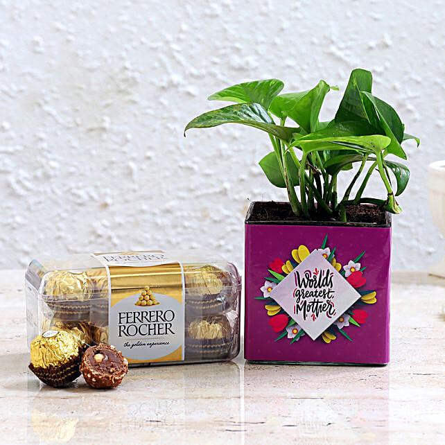 Thank You Mom Money Plant And Ferrero Rocher