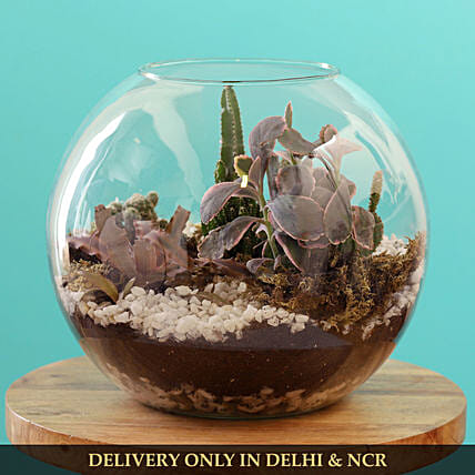 cactus plant in fish bowl:Buy Dish Gardens