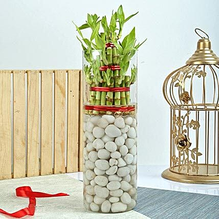 Three layer bamboo in a large round glass vase with white pebbles