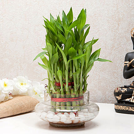 Three layer bamboo in a round glass potpourri vase with white pebbles:Office Desk Plants
