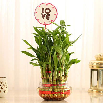 Lucky Bamboo for Valentines Day