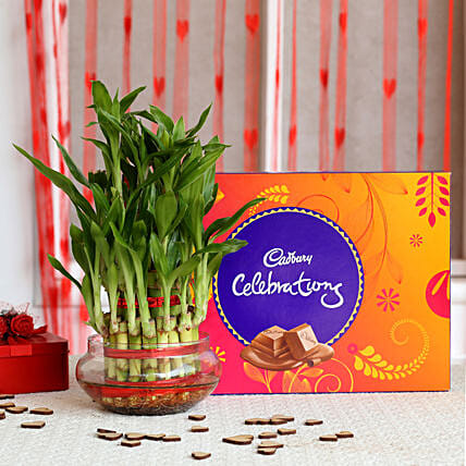 Bamboo Plant N Chocolate Valentine Online