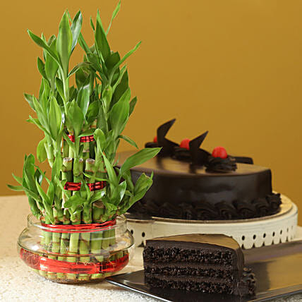 3 Layer Bamboo with Cake:Combos Bestsellers
