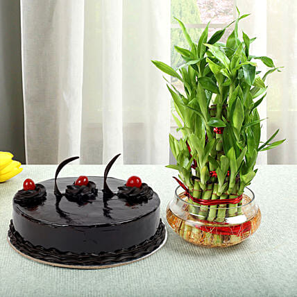 3 Layer Bamboo with Cake:Plant Combos For Mothers Day