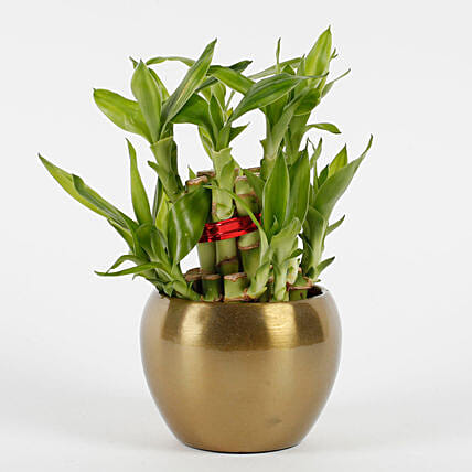 bamboo plant in copper metal pot