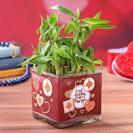 Lucky Bamboo in Valentines Glass Vase:Valentines Day Lucky Bamboo