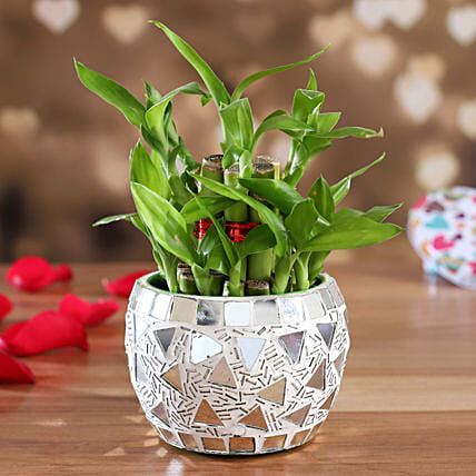 Two Layer Bamboo Plant In Metal Planter:Gift Store