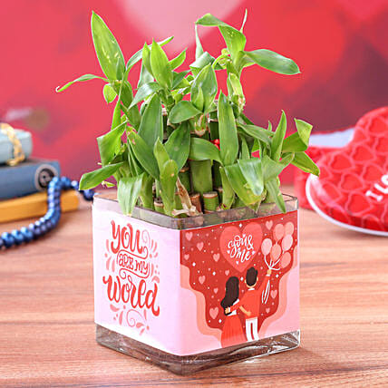 Two Layer Bamboo Plant In You n Me Sticker Glass Vase:Lucky Bamboo Plants