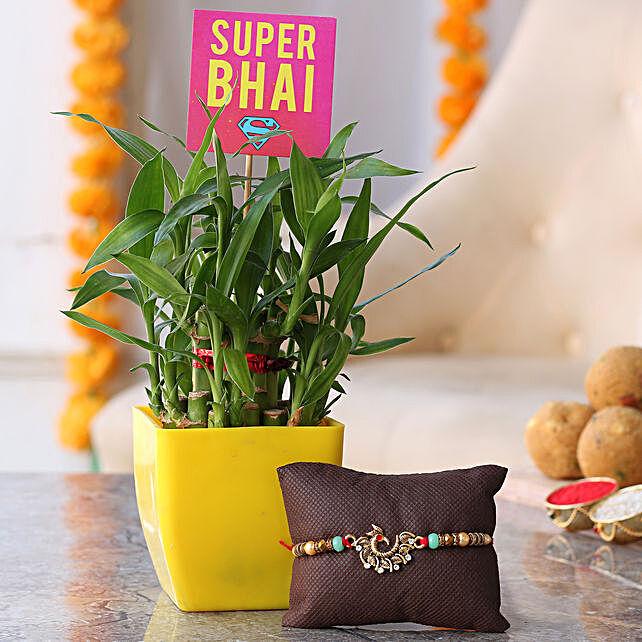Plant &  Rakhi Combo